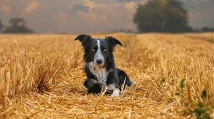 Dog Field Nature Pet 2047x1365 Wallpaper