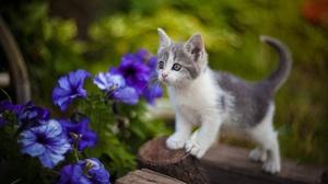 Baby Animal Cat Flower Kitten Pet 2560x1707 Wallpaper