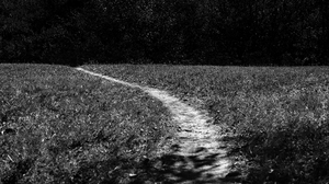 Nature Outdoors Monochrome Path Landscape Photography Grass Trees Wood 6016x3384 wallpaper