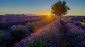 Summer Sky Sun Sunbeam Sunset Flower Tree Purple Flower 2000x1334 Wallpaper