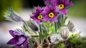 Flowers Plants Colorful Purple Flowers Water Drops Nature 2047x1152 Wallpaper