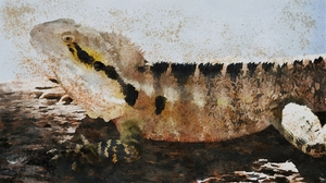 Artistic Eastern Water Dragon Lizard Reptile Water Dragon Watercolor 2176x1224 Wallpaper