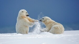 Cute Playing Polar Bear Snow Winter 1920x1080 Wallpaper