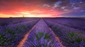Lavender Field Plants Agro Plants Sky Sunlight Landscape 2048x1391 Wallpaper