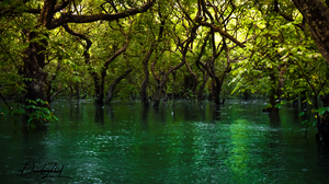 Forest Green Swamp Tree Water 3554x1999 Wallpaper