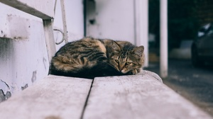 Bench Cat Pet 3183x2122 Wallpaper