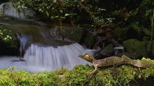 Gecko Lizard Moss Nature Reptile Stream Wildlife 2048x1239 Wallpaper