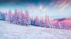Winter Fir Nature Landscape Hills Mountains Snow Sky Forest Trees Pink White Cold Colorful Clouds Su 5891x4000 Wallpaper