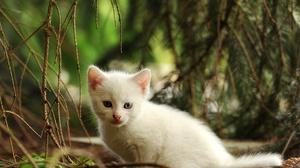 Baby Animal Cat Kitten Pet 3280x2340 Wallpaper