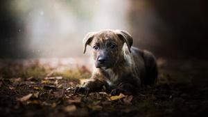 Baby Animal Depth Of Field Dog Pet Puppy Sunbeam 2048x1365 Wallpaper