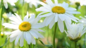 Flower White Flower 2232x1484 Wallpaper