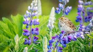 Bird Flower Lupine Wildlife 2048x1365 Wallpaper