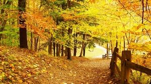 Road Fall Tree 2880x1800 Wallpaper