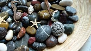 Pebbles Seahorse Shell Starfish 2048x1536 Wallpaper