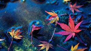 Leaf Maple Leaf Water 5616x3159 Wallpaper