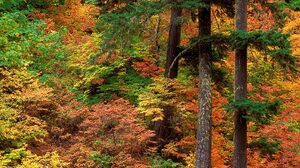 Forest Tree 1600x1200 Wallpaper