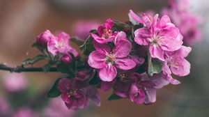Earth Blossom 2048x1318 Wallpaper