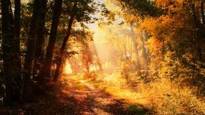 Fall Foliage Nature Path Sunbeam 3840x2160 Wallpaper