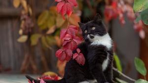 Baby Animal Cat Kitten Pet 3543x2362 Wallpaper