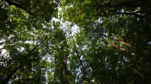 Forest Tree Treetops 4928x3264 Wallpaper