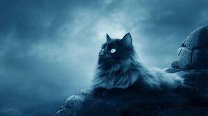 Cat 1680x1050 Wallpaper