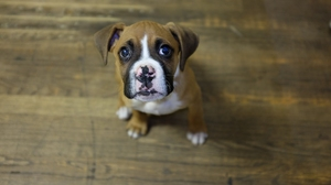 Dog Puppy 2048x1280 Wallpaper