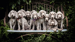Dog Bench Puppy Pet Baby Animal 2048x1365 Wallpaper
