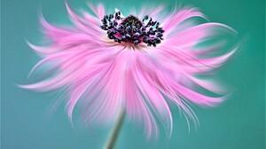 Macro Pink Flower 5760x3840 Wallpaper