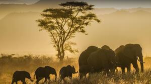 Animal Elephant 2048x1365 Wallpaper