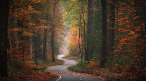 Fall Foliage Forest Nature Road 1920x1281 Wallpaper