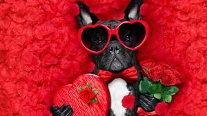 Dog Funny Heart Love Petal Romantic Rose Sunglasses Valentine 039 S Day 6000x4000 Wallpaper
