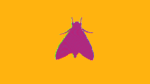 Moth Insect Yellow Purple Minimalism Abstract Trippy Psychedelic 1702x957 wallpaper