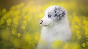 Baby Animal Border Collie Dog Flower Pet Puppy 2048x1365 Wallpaper