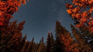 Nature Trees Forest Landscape Stars Starry Night 3936x2624 Wallpaper