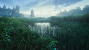 Stream Water Grass Reeds Mist Nature Outdoors Photography Anton Kononov Trees 2250x1406 Wallpaper