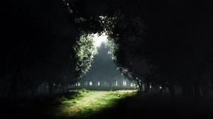 Dark Earth Forest Meadow 2560x1600 Wallpaper