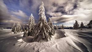 Cloud Snow Nature Fir Tree 2000x1334 Wallpaper