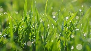 Bokeh Grass Green Macro Nature 2088x1387 Wallpaper