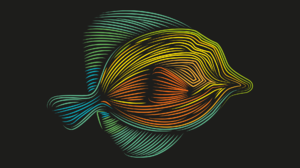 Artistic Colorful Colors Fish Minimalist 1920x1358 Wallpaper