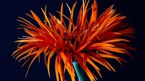 Gerbera Macro Orange Flower 2048x1441 Wallpaper