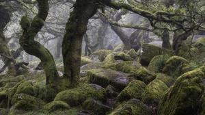 Nature Stones Rock Trees Plants 2560x1707 Wallpaper