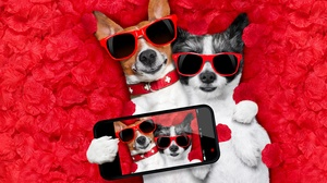 Dog Funny Heart Love Petal Romantic Rose 6000x4162 Wallpaper