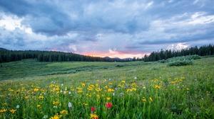 Flower Field Cloud 5120x2880 wallpaper