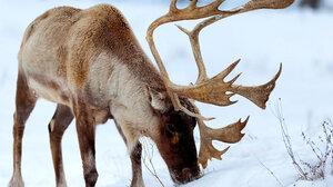 Animal Deer 3400x2238 Wallpaper