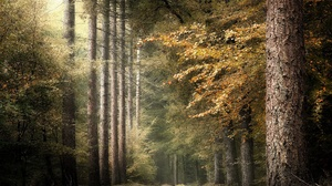 Fall Forest Nature 2048x1365 wallpaper