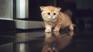 Baby Animal Cat Kitten Pet Reflection 4000x2670 Wallpaper