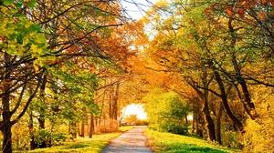 Fall Tree 2560x1600 Wallpaper