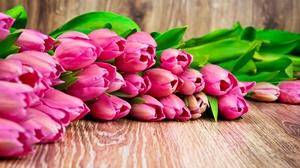 Flower Pink Flower Tulip 6544x4912 wallpaper