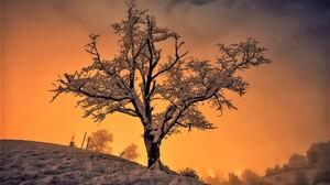 Earth Sky Snow Sunset Tree Winter 1920x1200 Wallpaper
