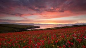 Cloud Flower Horizon Meadow Nature Poppy Red Flower Sky Sunset 2048x1366 Wallpaper